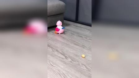 儿子每天起床就追着母鸡后面跑