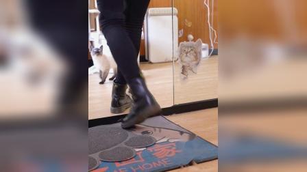 宠物零食洁齿饼干视频