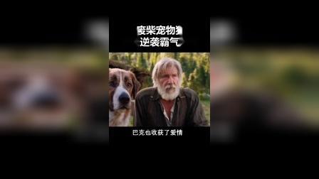 废柴宠物狗,逆袭成狼王,太励志