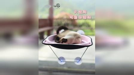 吸盘猫吊床 宠物用品