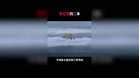 北极熊偶遇哈士奇,狠狠一把抱住