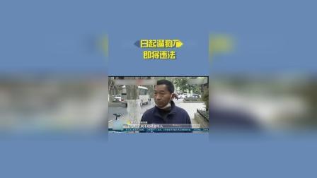 5月1日起遛狗不拴绳违法