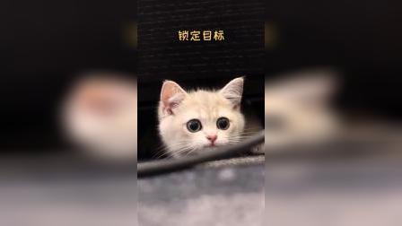 早期小奶猫捕猎铲屎官的珍贵影像