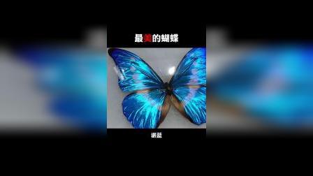 世界上最美的蝴蝶,一只36万