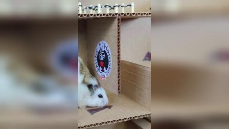 仓鼠历险记:好家伙差点给我卡住在这了!