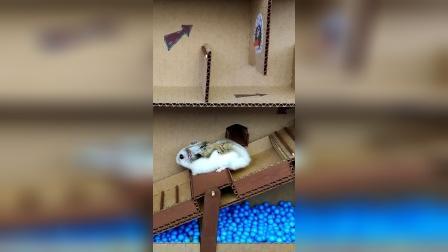 仓鼠历险记:不好,得减肥了!
