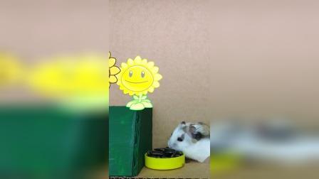 仓鼠历险记:我要享受阳光浴和美食了!