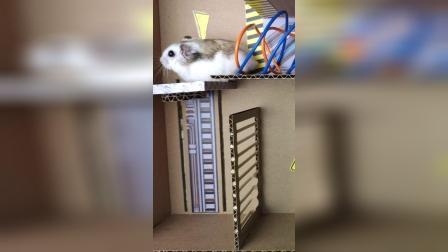 仓鼠历险记:这我怎么过去啊,谁来帮帮我!