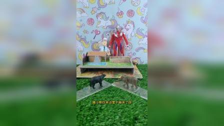 梦幻乐园:大熊找蜂蜜吃