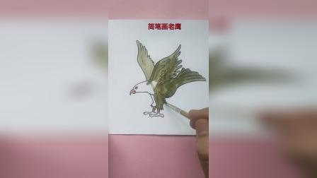 简笔画老鹰