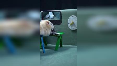 仓鼠历险记:逃出生天,可是已经暴露了!