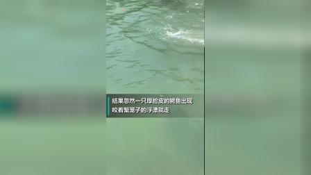 美女在河道上抓螃蟹时忽然一只鳄鱼出现 下一秒让她们尖叫