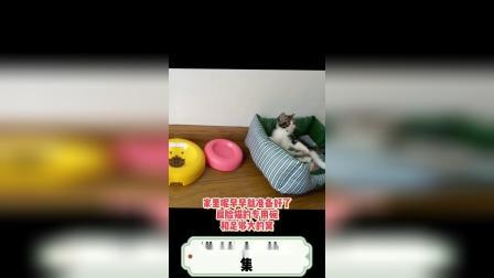 今天继续分享,猫咪的来历第二集