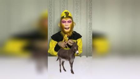 童年趣事:猴哥品尝人间美味的驴肉