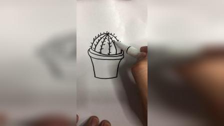 画仙人球盆栽