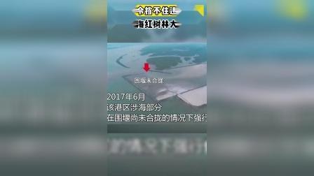 广西北海红树林大片消失#全网热点
