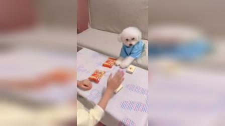 童年趣事:我做什么,狗狗做什么