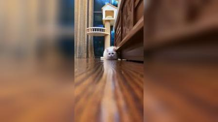 底盘那么低的猫咪,你喜欢吗