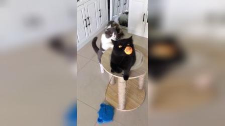 这样黑不溜秋的猫咪你们喜欢吗