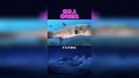 世界上最毒的几种鱼,你认识几个