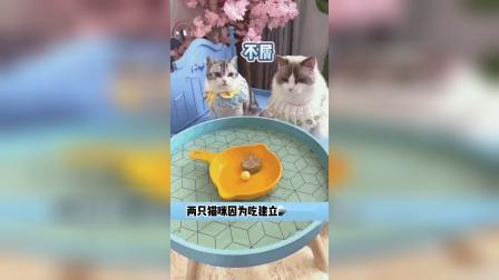 两只猫咪因为吃建立起的友谊
