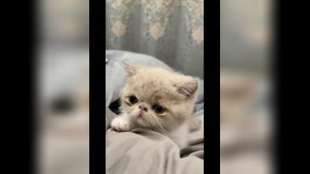 上班时间想看下小奶猫,男盆友安排