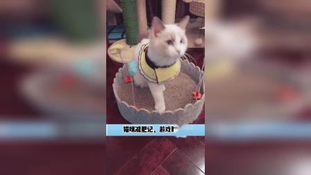 猫咪减肥记,游戏时间到了