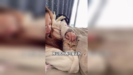 高冷猫排挤粘人猫,这都拉帮结派了吗