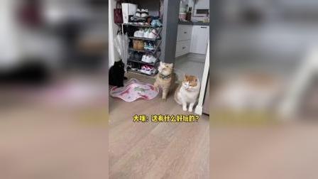 猫猫说:逗猫棒快给我摇起来