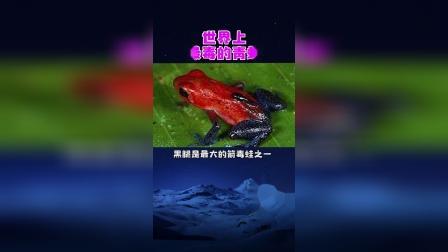世界上最毒的青蛙