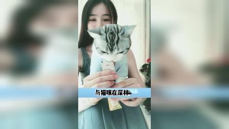 猫咪的爱,真的有被感动到