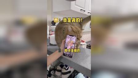 猫猫和两个自己吵架,就差把手机给吃了