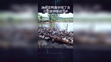 日本人为什么称鸭粪为软黄金?