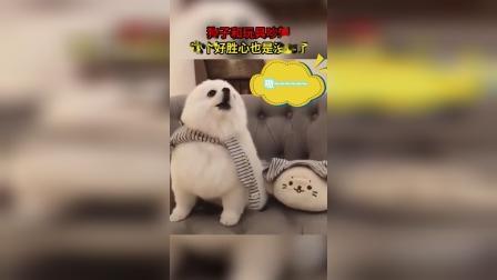君博每日一笑:狗子这么可爱为什么要骂狗子!
