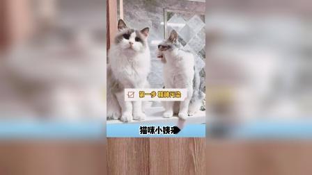 猫咪小姨来啦,两只猫咪又开始了新计划