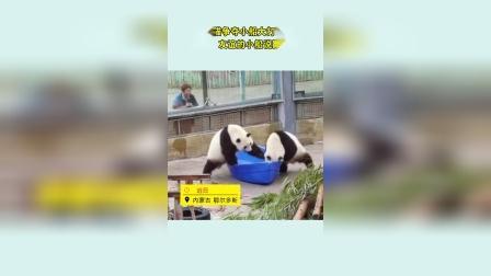 大熊猫争夺小船大打出手 网友:友谊的小船说翻就翻