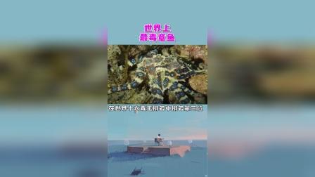 世界最毒章鱼,蓝环章鱼