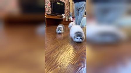 底盘这么低的猫咪,就问你们,喜不喜欢