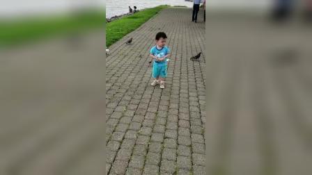 7-19鸽子为友