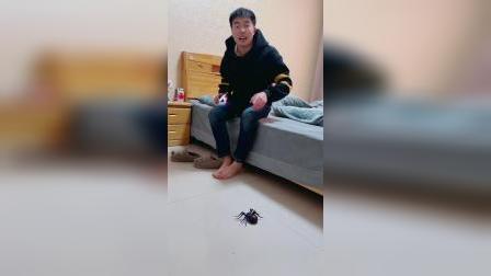 我哥直接被假蜘蛛,吓得飞起来啦!
