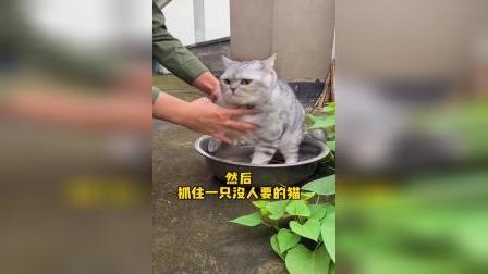 这种没人要的猫,在我们这到处都是