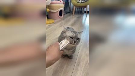 我家猫用了痔疮膏后、事情有点不受控制了!