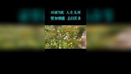短歌行(重庆璧山三合乡村风光)