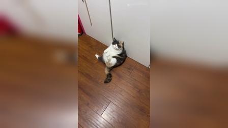《家 有 肥 猫》.mp4《家 有 肥 猫》