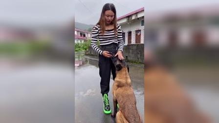 退役犬抓小偷!燃爆!你愿意为他点赞吗?