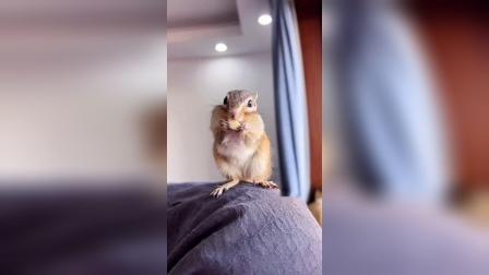 小松鼠的眼光真好,而且很贴心哦!