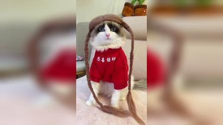 猫掉下来的毛千万不要扔
