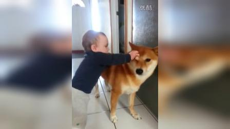 【冯导】宝宝为了跟柴犬玩耍竟然第一次站起来了