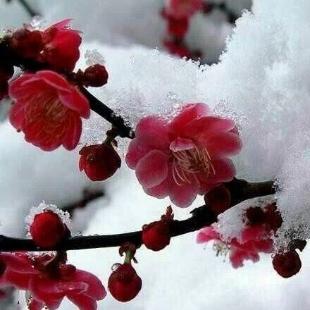 万紫千红梅花香